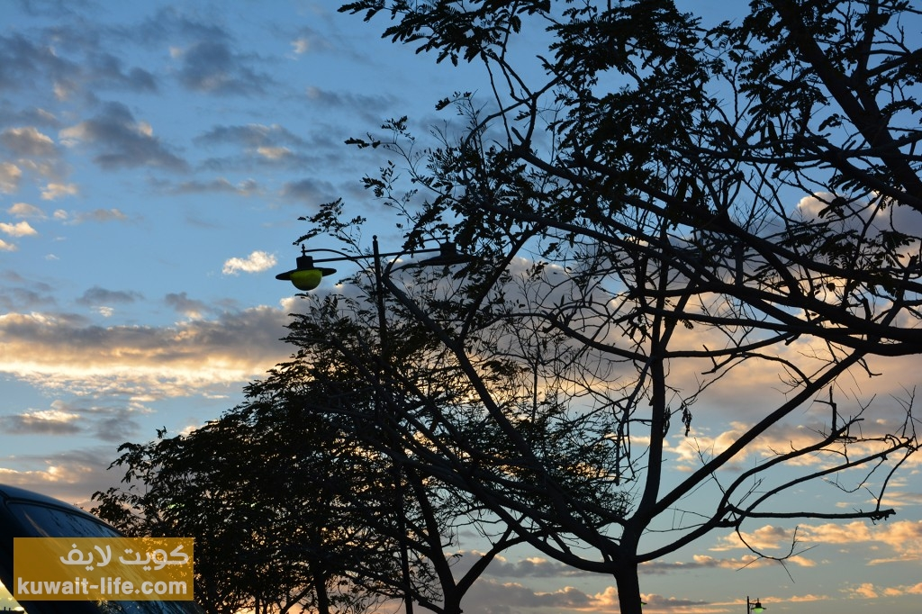 الأشجار عند الغروب، شاطئ المارينا
